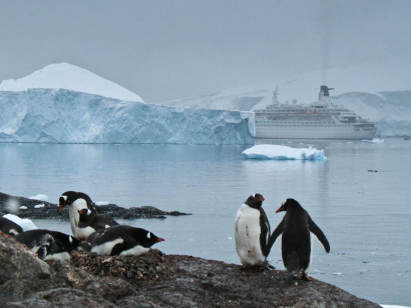 Penguins and ship
