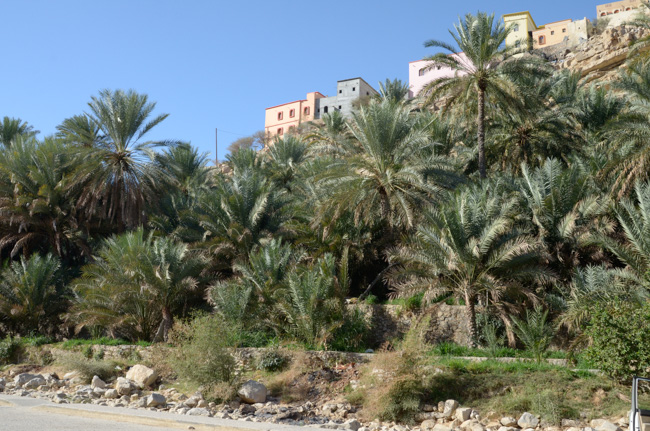 Palm terraces