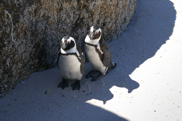 Hot penguins
